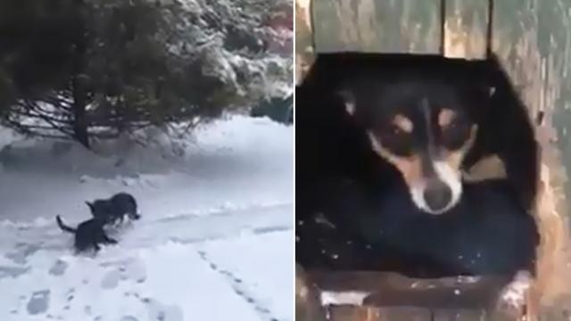 Heartwarming video of dog dragging a freezing cat into it's doghouse to help her feel warm