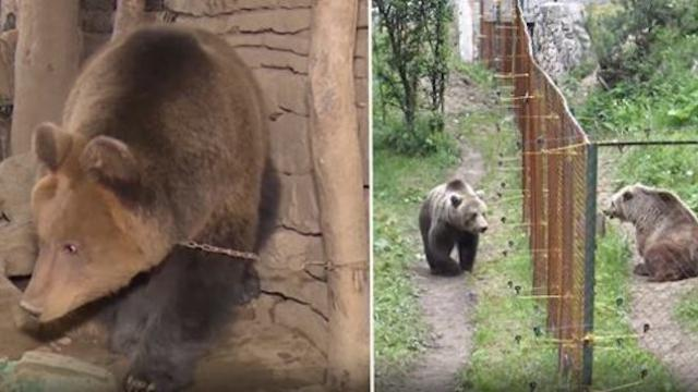 This bear has lived alone all his life Watch the moment it sees