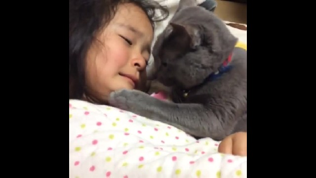 Sweet kitty can't stand moment little girl breaks down crying, comforts her with tiny paw