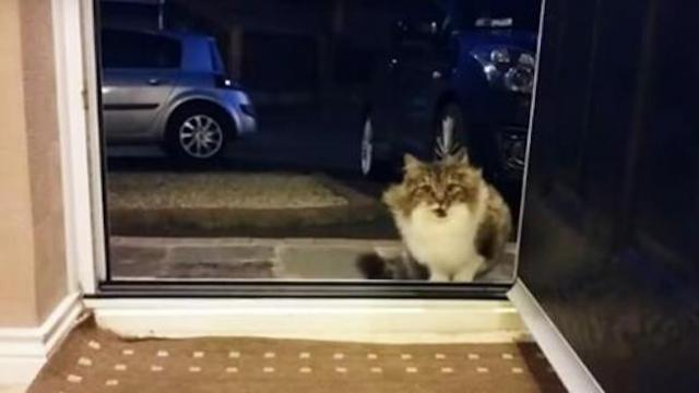 Homeless cat begs to come into the house, then the owner realizes she is not alone