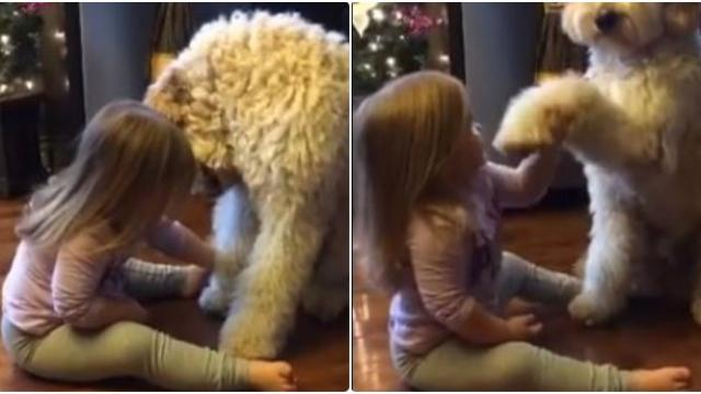 Dad caught her teaching the dog a trick, leaving him with a memory he'll never forget