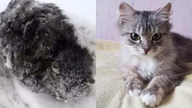 Man saves frozen kitten that everyone else ignored — the transformation is incredible