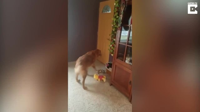 Grieving 12-Yr-Old Dog Gets Fluffy Present And Has The Most Precious Reaction