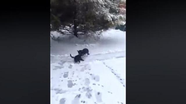"Woman Records Dog Drag Stray Cat Through Snow Only To Discover ""Mission"" Lighting Up The Internet"