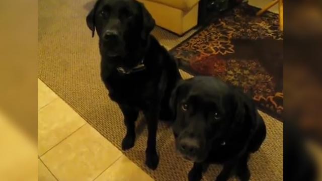 Dogs are asked who stole the last cookie, the one on the left will leave you howling