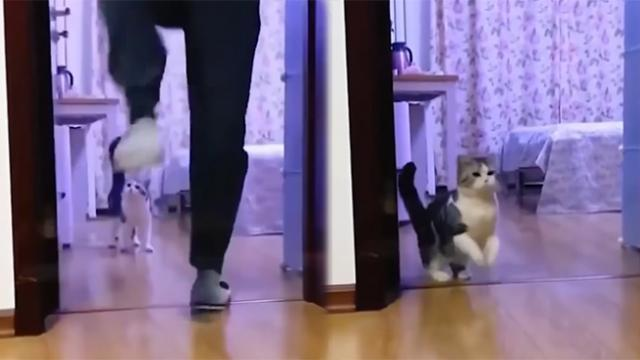 Funny cat jumps whenever he sees his owner jumps, here's why
