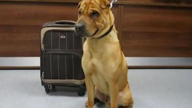 Dog abandoned at train station tied to a luggage bag full of his favorite belongings