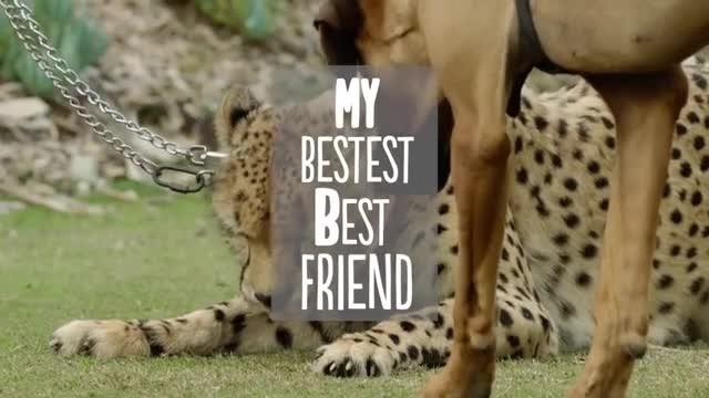 A dog and cheetah met as babies - and just wait until you see them now