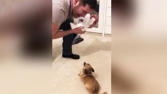Excited chihuahua meets newborn baby for the first time, her reaction stuns parents