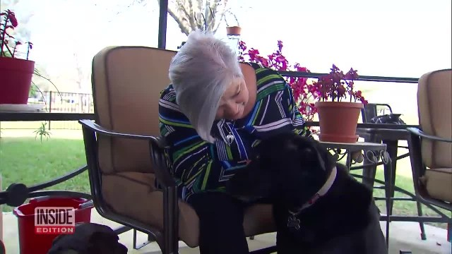 After Woman Suffers Stroke, Doorbell Cam Captures 2 Dogs Running Through Neighborhood For Help