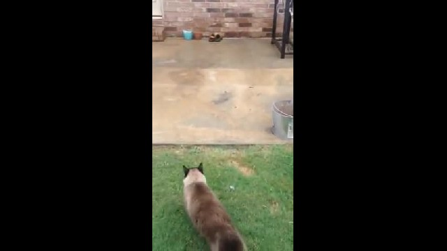 He spent all day making the cat door. Now watch the cat's first attempt to go through