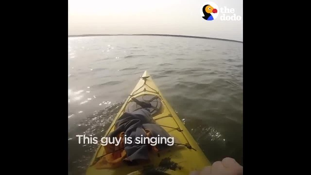 Mans Singing Causes Whales To Rush To Surface, When He Dives In, That's When The Real Show Starts