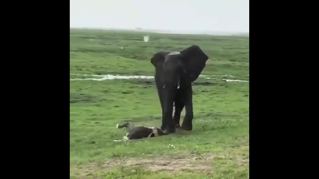 Elephant mom gave birth and herd had adorable group reaction to welcome the baby