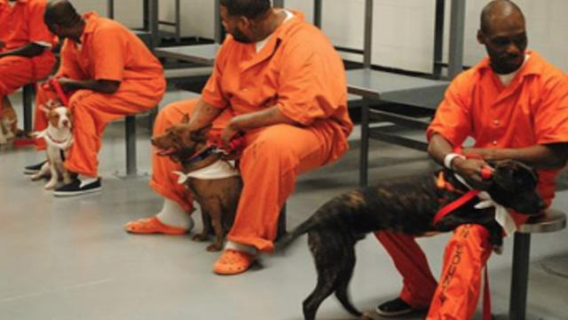New program allows inmates to train dogs …the results are incredible