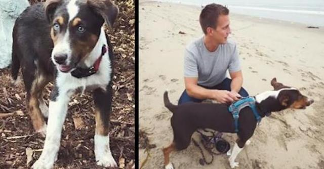 Homeless dog loses eyesight only to have heart-stirring reaction to first time at ocean