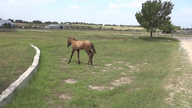Baby horse scared to jump wall, how mama steps in is melting everyone's heart