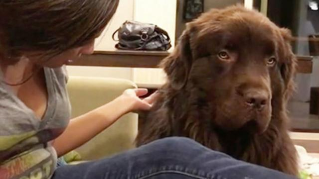 Dog is upset with mom and refuses to let it go, until she says