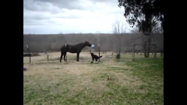 Dad Spots His Horse Acting Strange, Decides To Take Video Of It