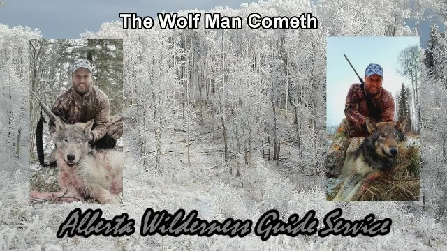 Trophy Timber Wolf Hunting with AWGS in Alberta, Canada - The Wolf Man Cometh