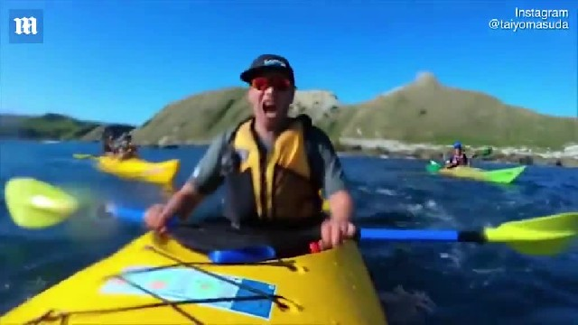 Seal slaps a kayaker in the face with a gigantic octopus