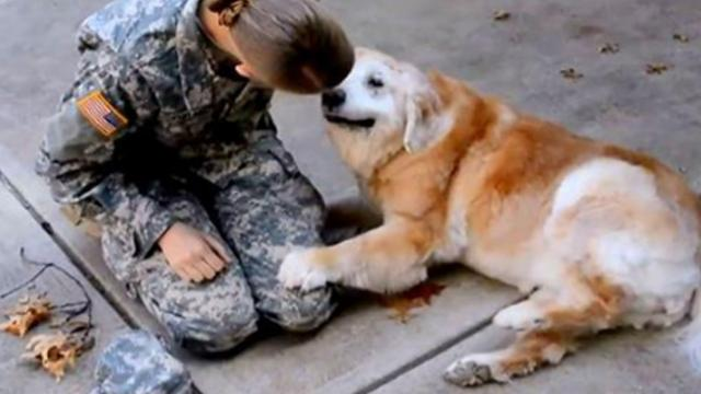 The moment this senior dog realizes his owner is back from deployment had me drying tears