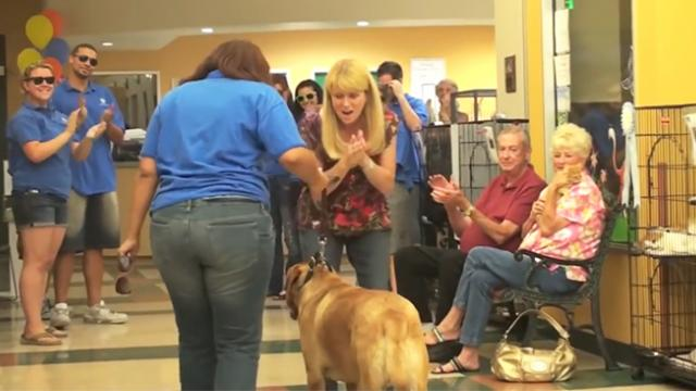 These cool animal shelter workers bid a cute dog farewell by having a dance party!