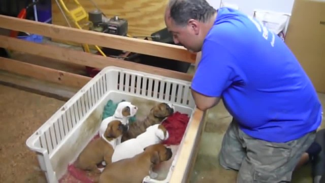 Dad begins singing to puppies and in no time mom captures footage that knocks her for a loop