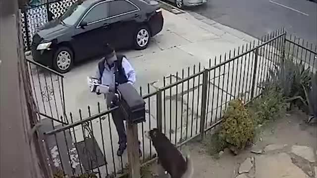 USPS mail carrier pepper sprays dog over a fence in Los Angeles