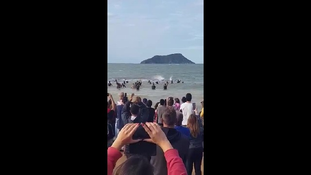 """ Hundreds Gather To Rescue Desperate Whale Hours From Death, Then It Says Thanks"""