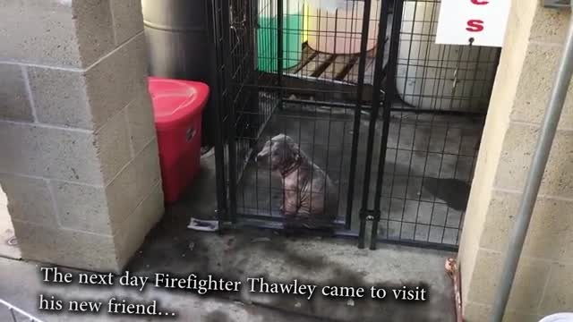 Sick Stray Puppy Overjoyed When Firefighter Who Saved Her Comes To Visit