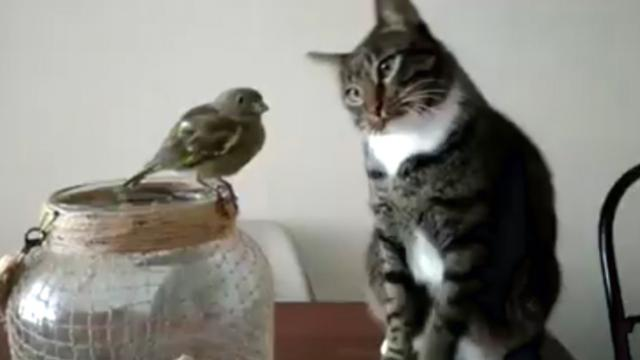 Cat has its sights locked on this little bird and you won't believe what happened!