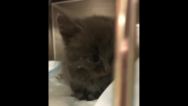 Kitten Saved from the Side of the Road, Blossoms into Sweetest Cuddle-bug