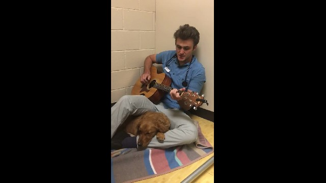 Dreamy Vet Grabs Guitar, Soothes Nervous Golden Retriever Before Surgery