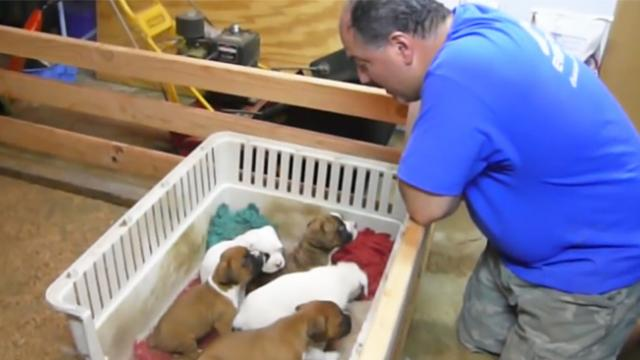 Active puppies do not want to sleep so dad starts singing lullaby