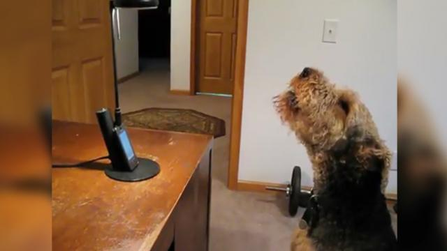 This dog calls human mom at work and their 'conversation' is hilarious