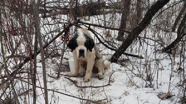 Lost St. Bernard miraculously survives 17 days outside in freezing temperatures