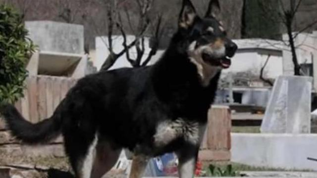 Loyal dog passes away after 11 years of protecting his master's grave