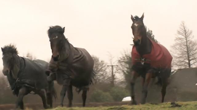 Two horses lovingly reunite after four years of separation