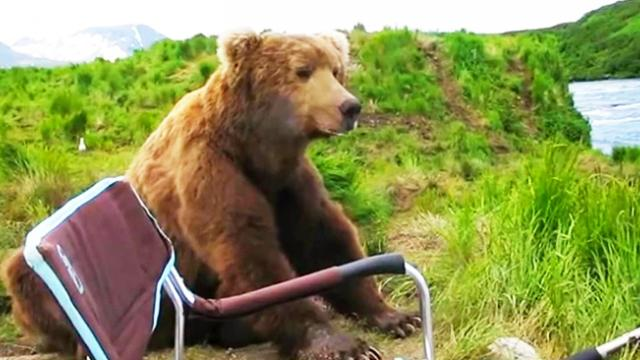 Man relaxing by river gets the shock of his life, when fully grown bear casually sits next to him