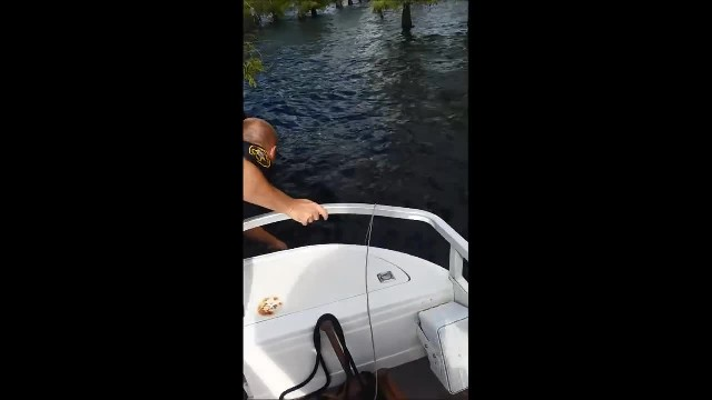 Video Bossier Deputies and a Neighbor Rescue Man and His Two Dogs in Water