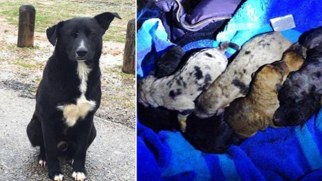Stray dog saves 11 puppies by barking really loudly at humans for attention