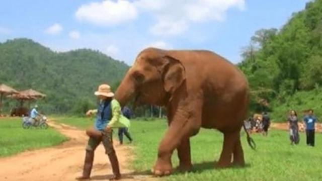 Elephant won't leave caretaker alone when she leads her to baby for touching sight caught on camera