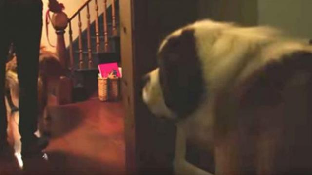 Neglected 130-pound dog steps into a home for the very first time