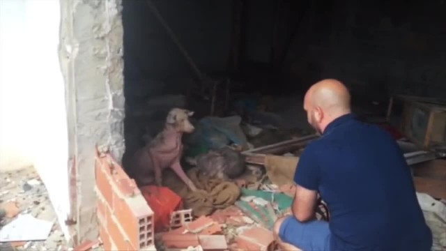 """ Dog Found Living His Own Version Of Hell Is Too Weak To Run From Rescuers"""