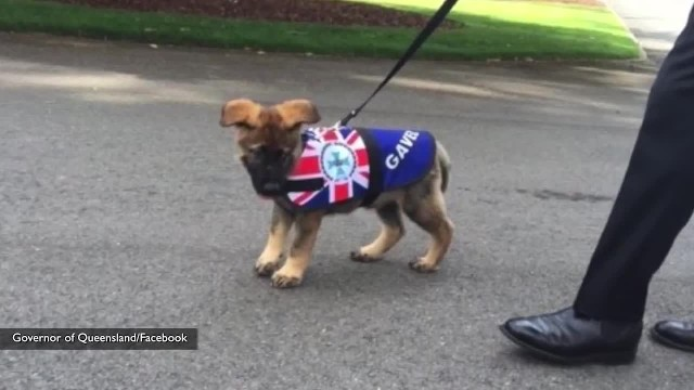 "Police dog sacked for being ""too friendly"" immediately gets new job"