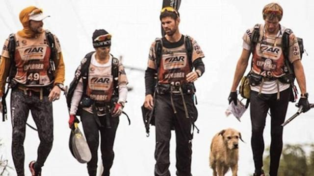 Stray dog joins 430-mile adventure race and ends up with a forever home