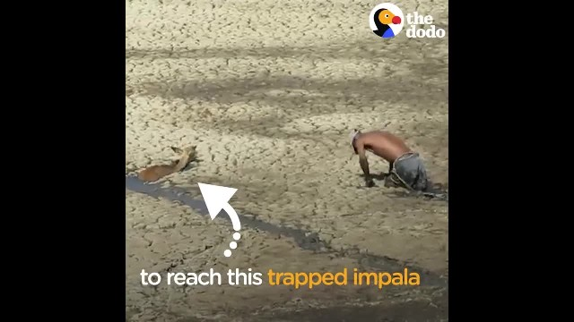 Man Uses Own Safety Rope to Rescue Impala Stuck in Mud - The Dodo