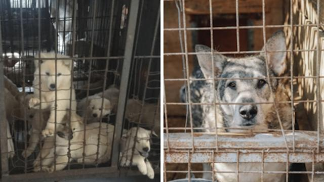 Great news: Seoul, South Korea will shut down all dog slaughterhouses