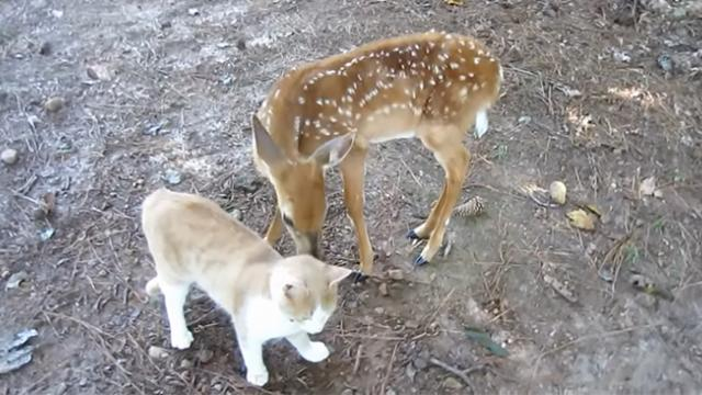 There's nothing cuter than watching two baby animals come together and play