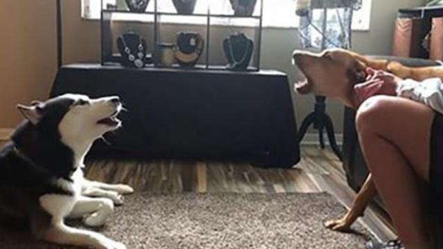 Two dog brothers get into heated argument over nothing before making up with a kiss